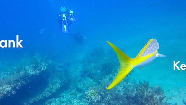 2018 Video - Key Largo Diving