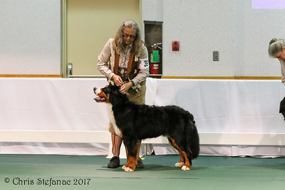 Sweeps 9-12 mos Puppy Dogs BMDCA 2017