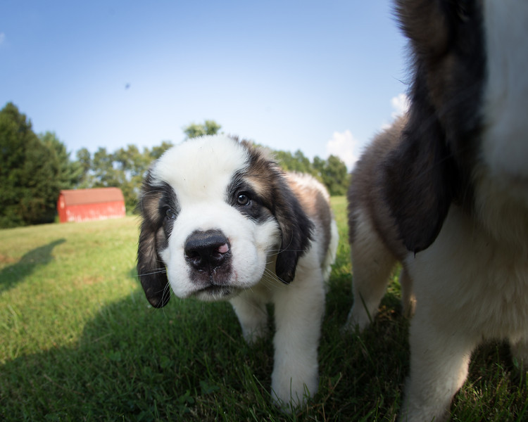 13_0910_puppies_ww-6010.jpg