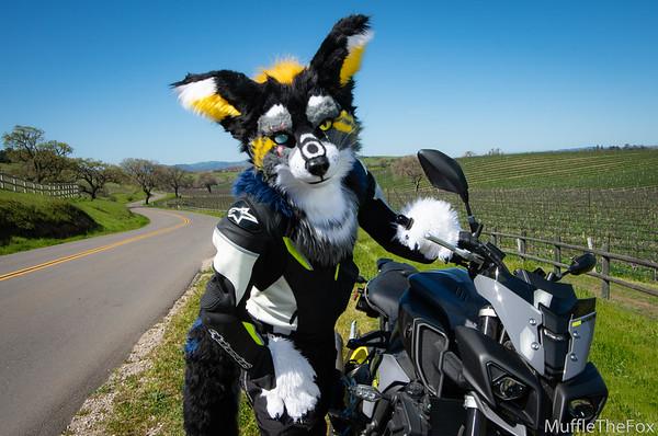 Blue Hasia Motorcycle Photoshoot