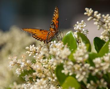 Butterflies 04-22-2012