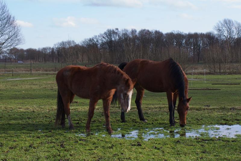 paardendrinken 018.jpg