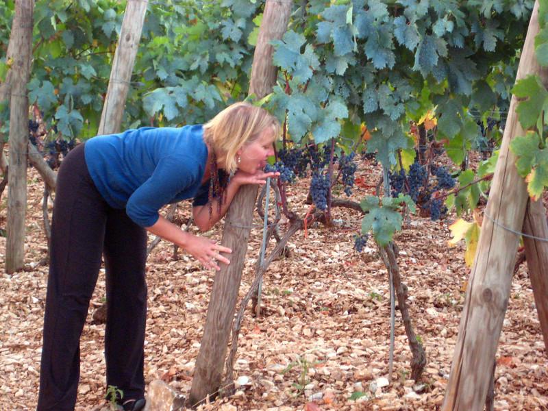 2011 0905 Brac eating grapes near Dol.jpg
