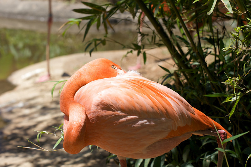 Zoo_Trip_9.jpg