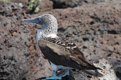 Peru, Ecuador, Galapagos  Birds