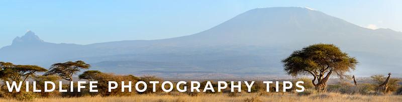 Improve Your Wildlife Photography Now