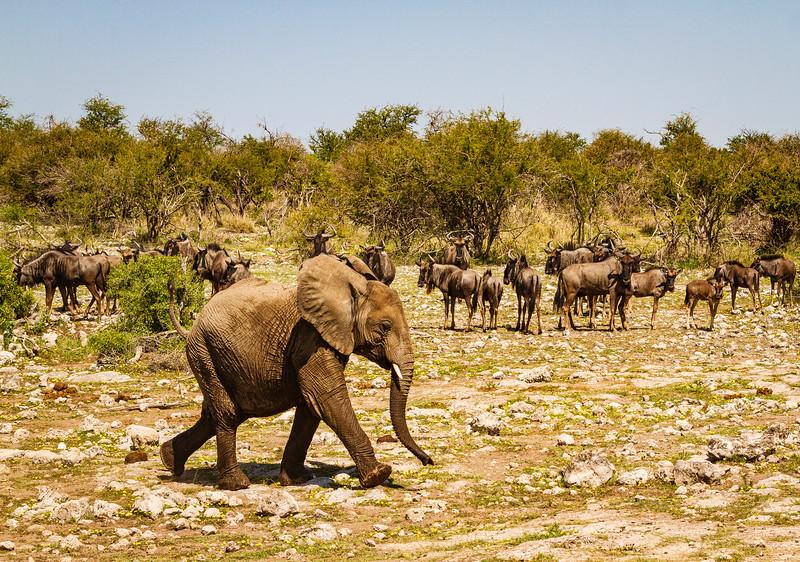 Elephant calves at Klein Okevi 5