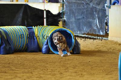 Garden State Norwegian Elkhound Club AKC Trial November 12-13