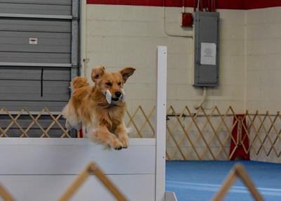 Oriole Dog Training Club - May 2013