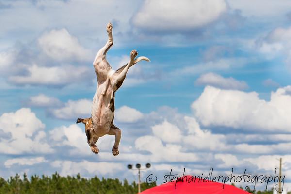 _MG_3367Up_dog_International_2016_StephaniellenPhotography.jpg