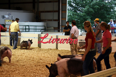 Swine Show 2012