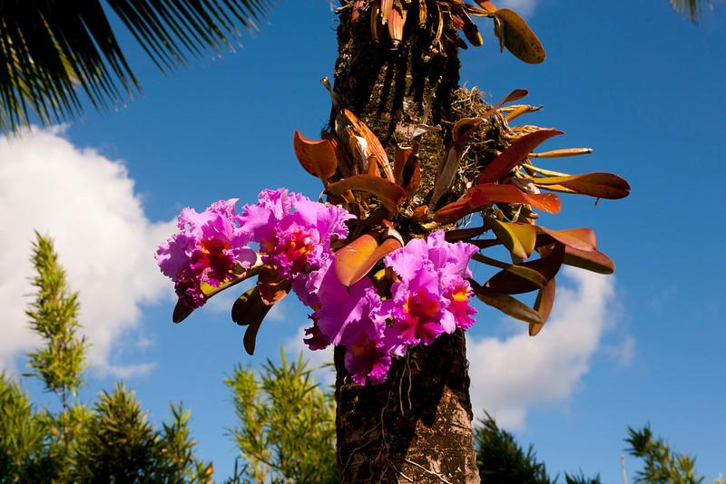Hawaii (Big) Island Landscapes