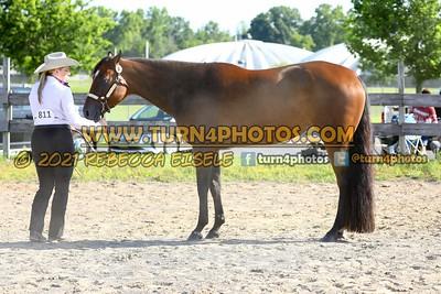 Junior Horse Halter   08/15/21