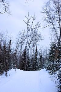 Ski de fond à l'Esterel