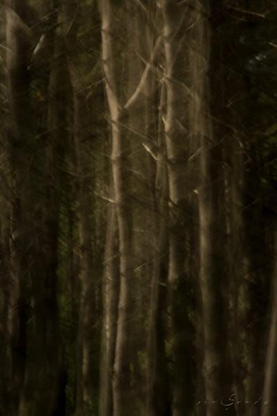 Espíritus del bosque. Brocéliande III
