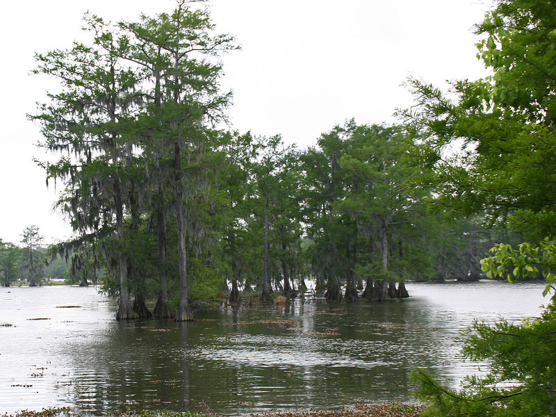 Lake Martin near Breaux Bridge, LA