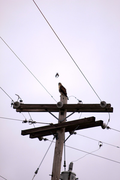 Hawk 071912