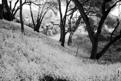Around Los Altos Hills - April 21st 2012