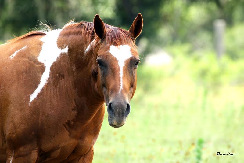 Horse 7-4-15 217.jpg