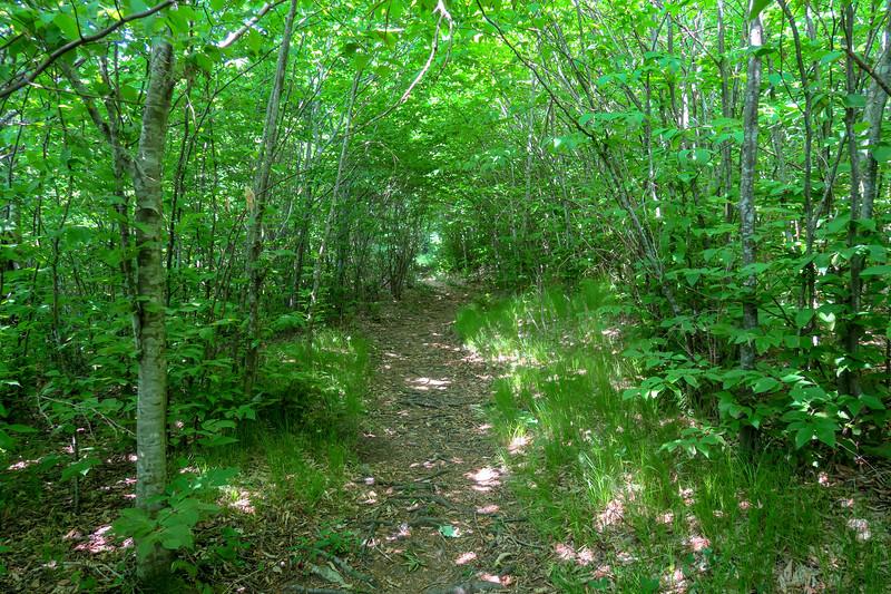 Graveyard Ridge Trail -- 5,200'