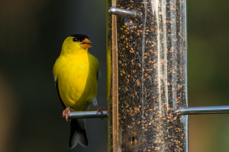 1106_birds_089.jpg