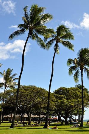 Hawaii Shots 2012