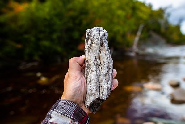 Ancient Carboniferous Fossil Trees