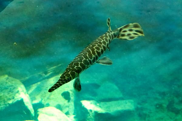 Birmingham Zoo Fish