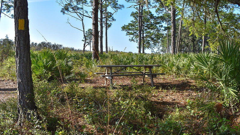 Picnic table in woods