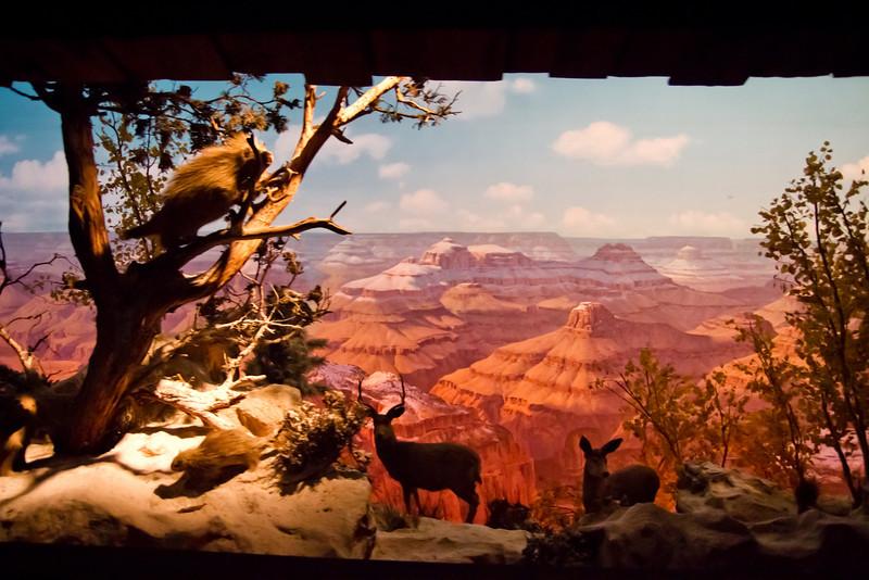 Grand Canyon Diarama From The Disneyland Railroad