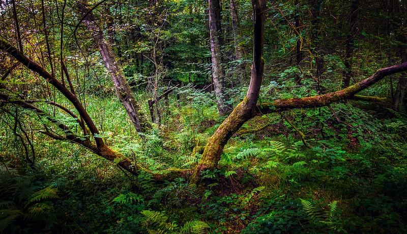 Forest Shadows-102.jpg