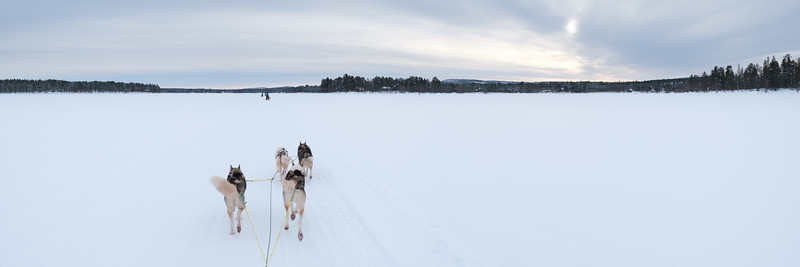 Huskies on Lake Inari