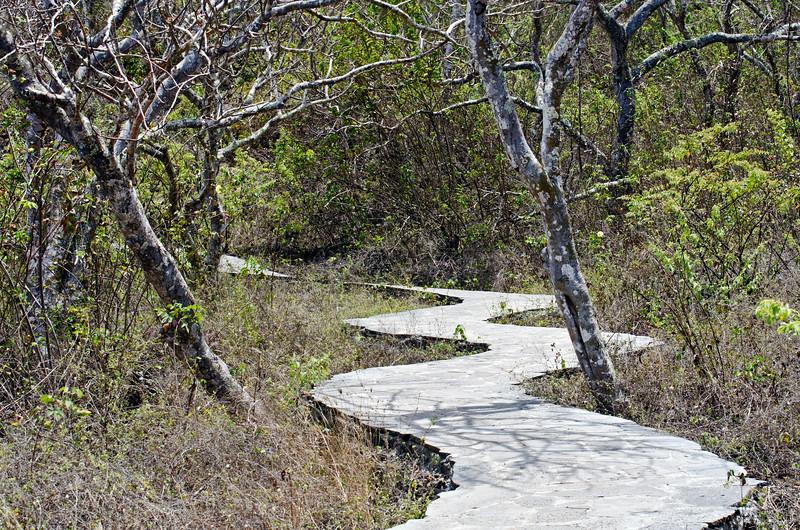 Walkway to Frigatebird Hill