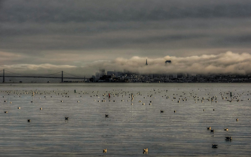 foggy-san-francisco-skyline-3.jpg
