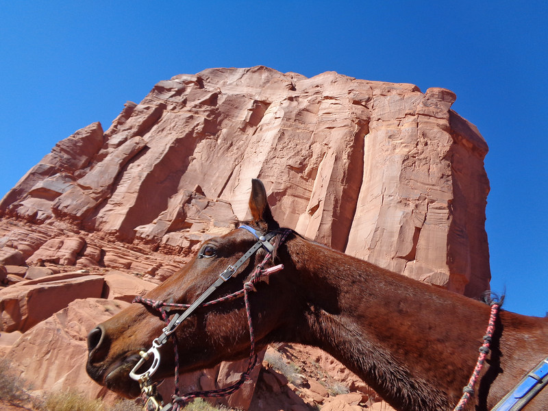 Riding Hillbillie Willie the Standardbred in the most beautiful endurance ride in the world! Moab Canyons
