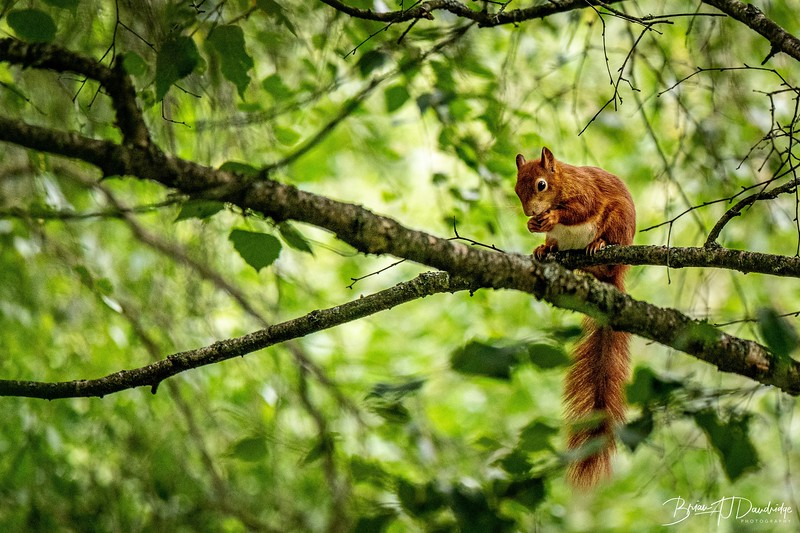 British Wildlife Centre_D850-0061.jpg