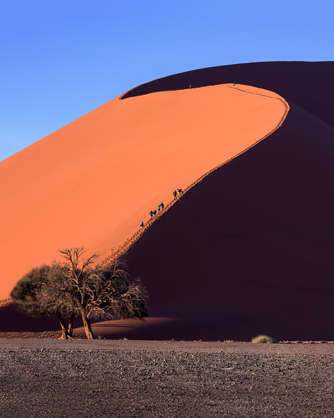 Dune 45 of Sossusvlei in the Morning, Namib-Naukluft Park, Namibia