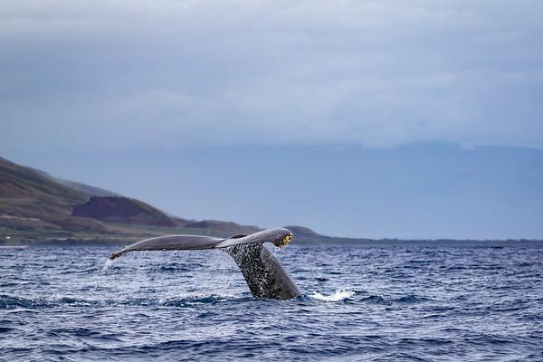 2018-02-28 Maui