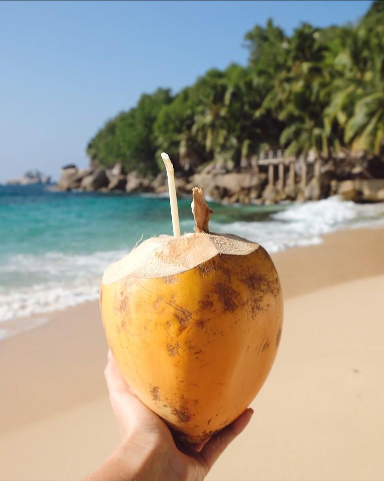 Coconuts on Anse Lazio