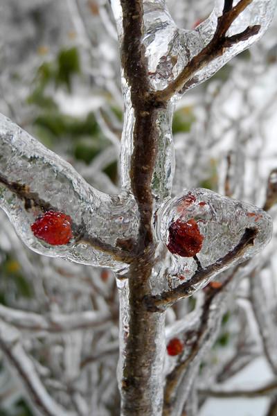 IceStorm-137.jpg