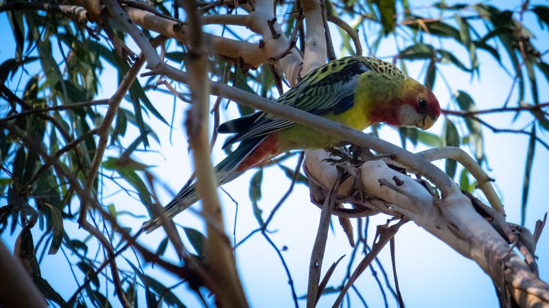 010219  birds  _1.JPG