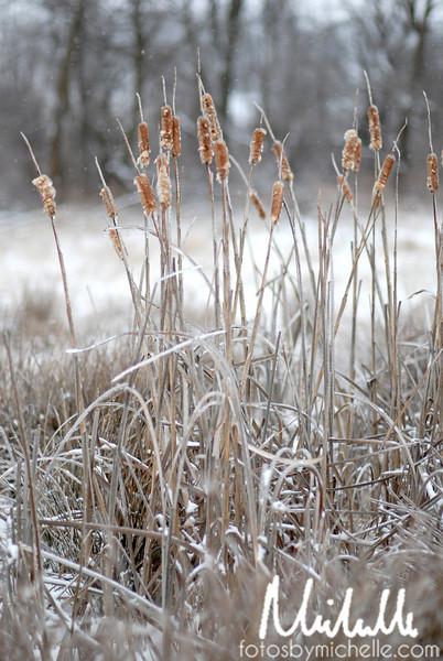 Snow1-29-10-009.jpg