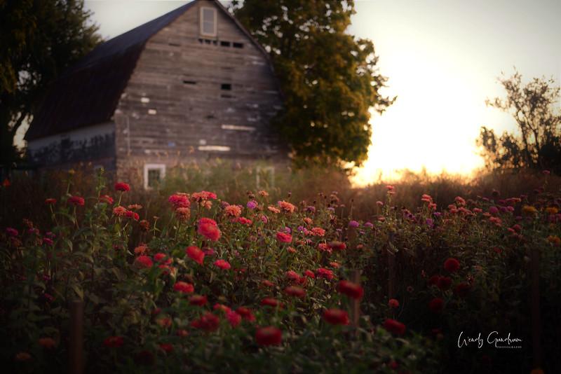 Fall Flowers.jpg