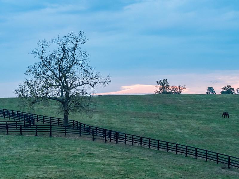 20 Oct 16 Horse farm M5 (1 of 1).jpg