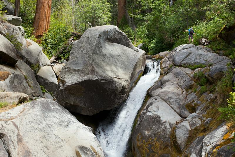 Sequoia_0534.jpg