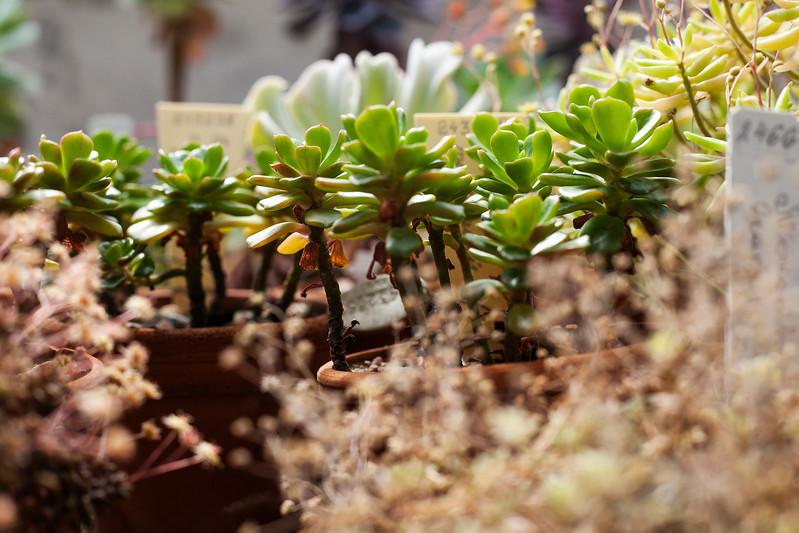 2016-06-10_Cactus_Greenhouse_044.jpg