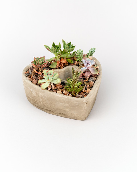 Product Photography | Succulents and Flowers | Denver CO