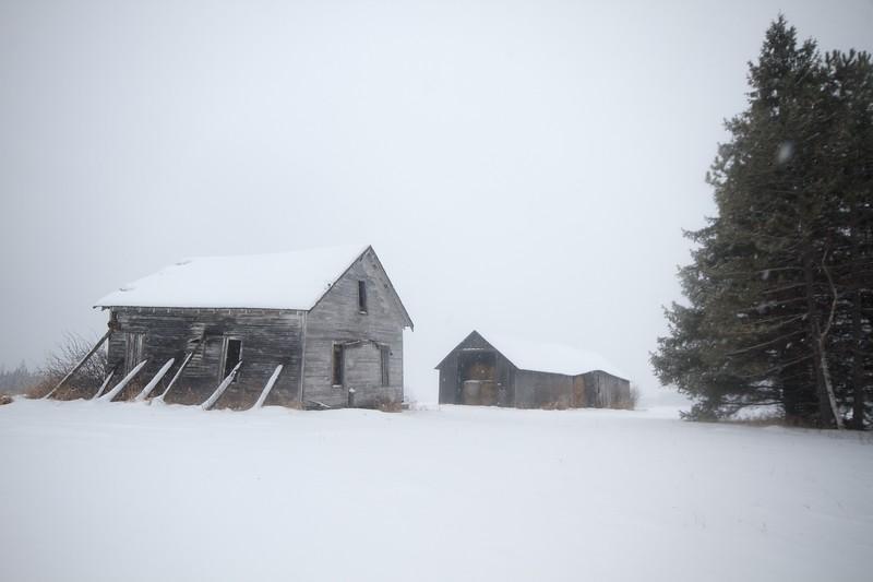 Farmstead Finnish barn Birch tree snow landscape CR5 Toivola MN Sax-Zim Bog IMG_9559.jpg