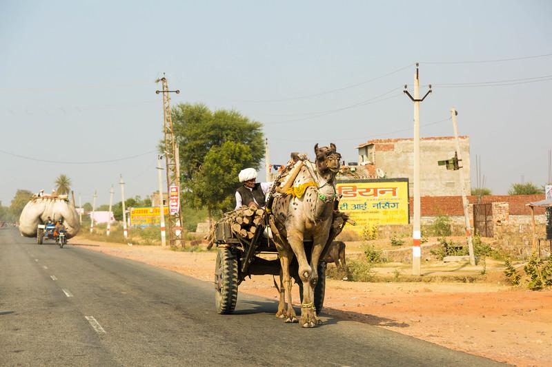 India-74.jpg