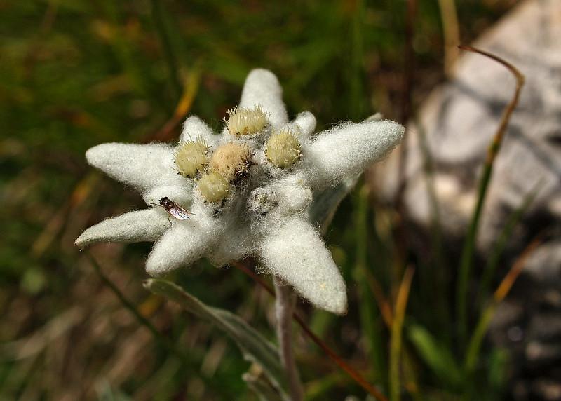 Edelweiss Cortina 27-7-07 (1).jpg